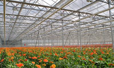 Gerbers Greenhouse